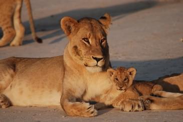 Family Safari fun