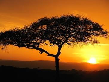 See Kenyan wildlife